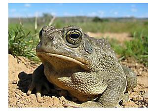 toad_utah_shutterstock_82635181