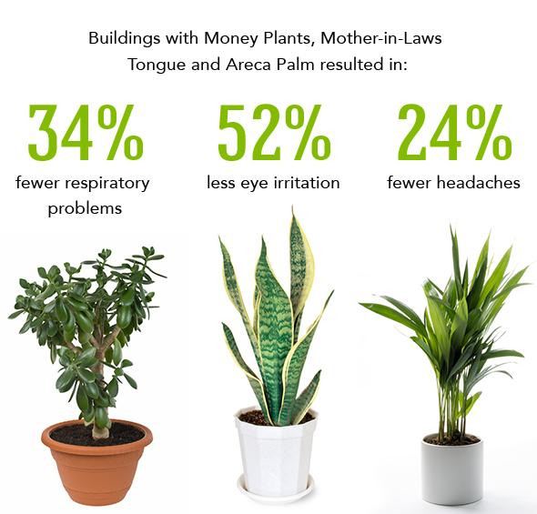 26 Best Indoor Plants for Your Home Nasa Best Plants For Home on best mulch for home, best trees for home, best solar system for home, best chairs for home, best pets for home, best fish for home, best dogs for home, best light for home, best flowers for home, best lighting for home, best lucky plant,
