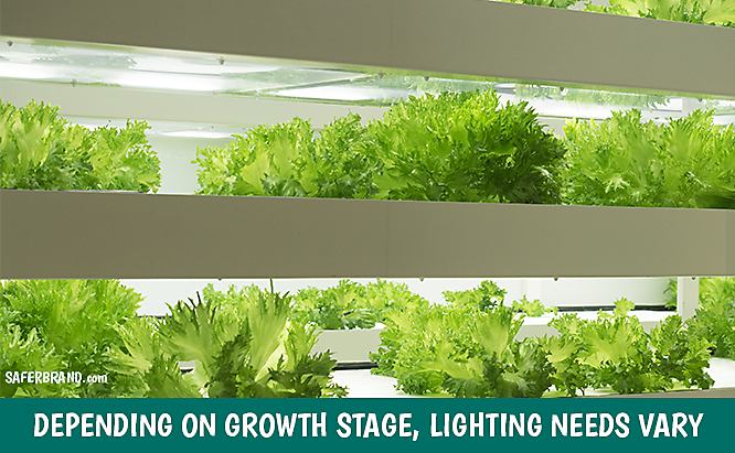 indoor garden nutrient and light needs for plant stage
