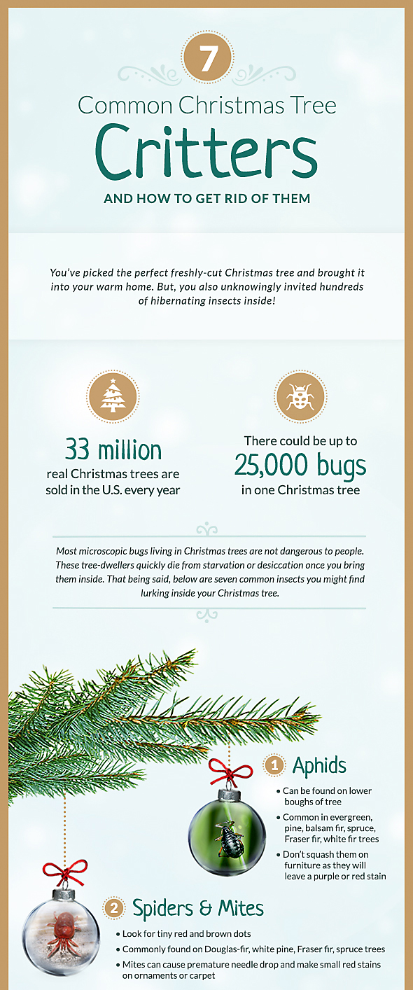 Common Christmas Tree Pests, Part 1