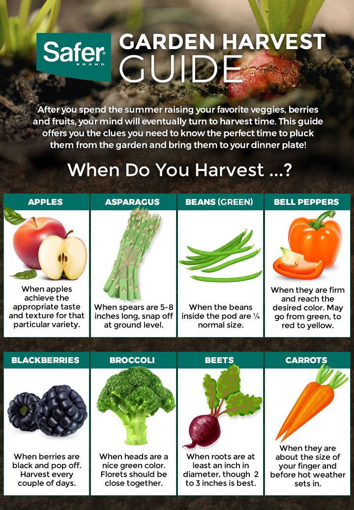 Safer Brand Garden Harvest Guide