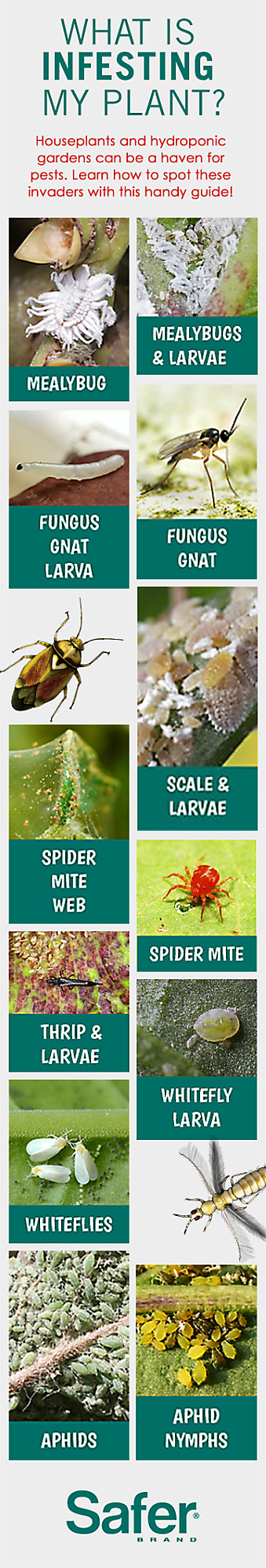 Indoor Garden Pests Indoor garden pests lifestyles of the creepy and crawly photos of bugs on plants workwithnaturefo