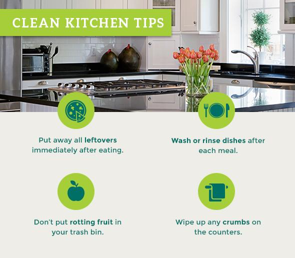 Clean Kitchen Tips