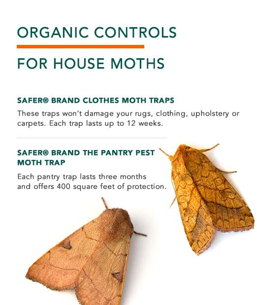 Organic Controls for House Moths