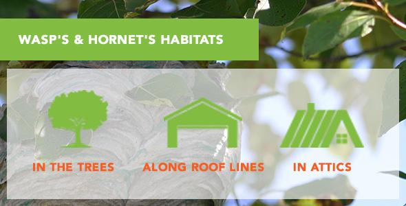 Habitatos: in trees, along rooflines, in attics