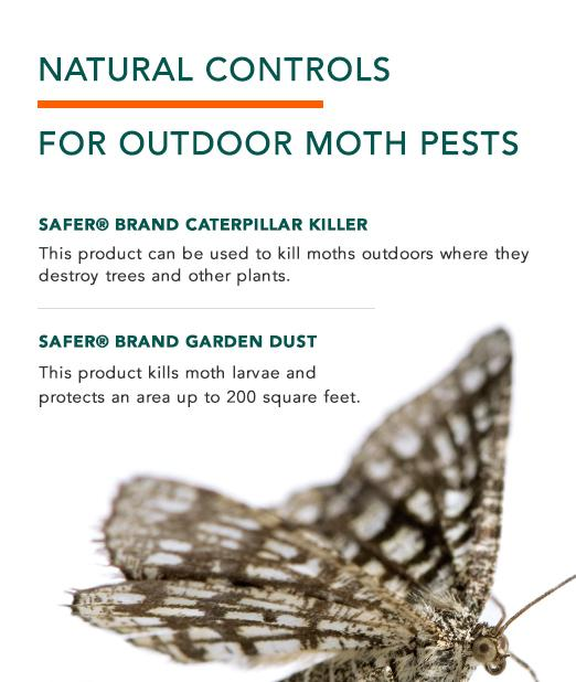 Natural Control Options for Outdoor Moth pests