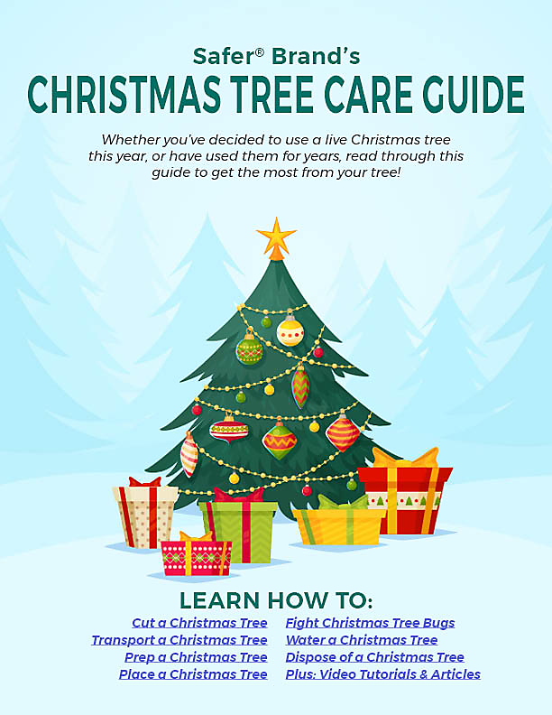 Christmas Tree Care Guide