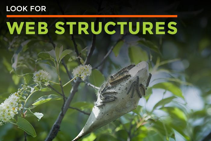 Look for web structures