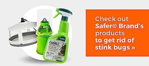 Check out Safer Brand's products to get rid of stink bugs