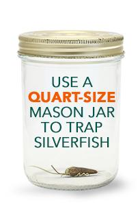 Use a quart-size mason jar to trap silverfish