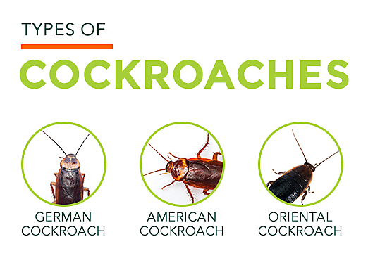 What do You Think if Bugs That Look Like Roaches