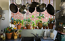Potted herbs in a kitche