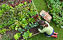 Woman working in a raised garden bed