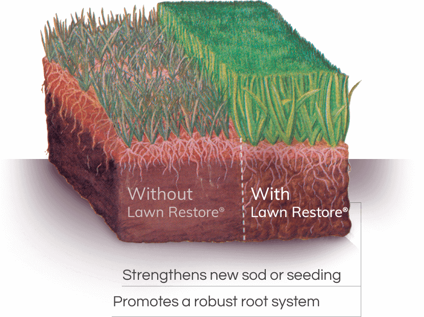 Lawn Restore Promotes a Robust Root System