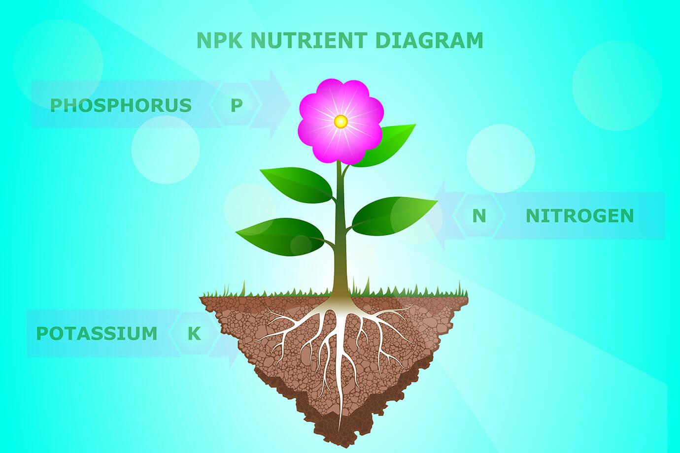 NPK Nutrient Diagram: Nitrogen (N), Phosphorus (P) and Potassium (K)