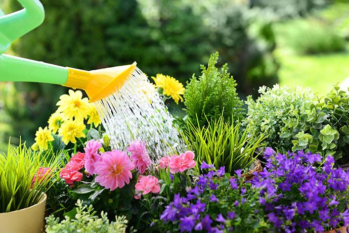A garden being watered with a watering can