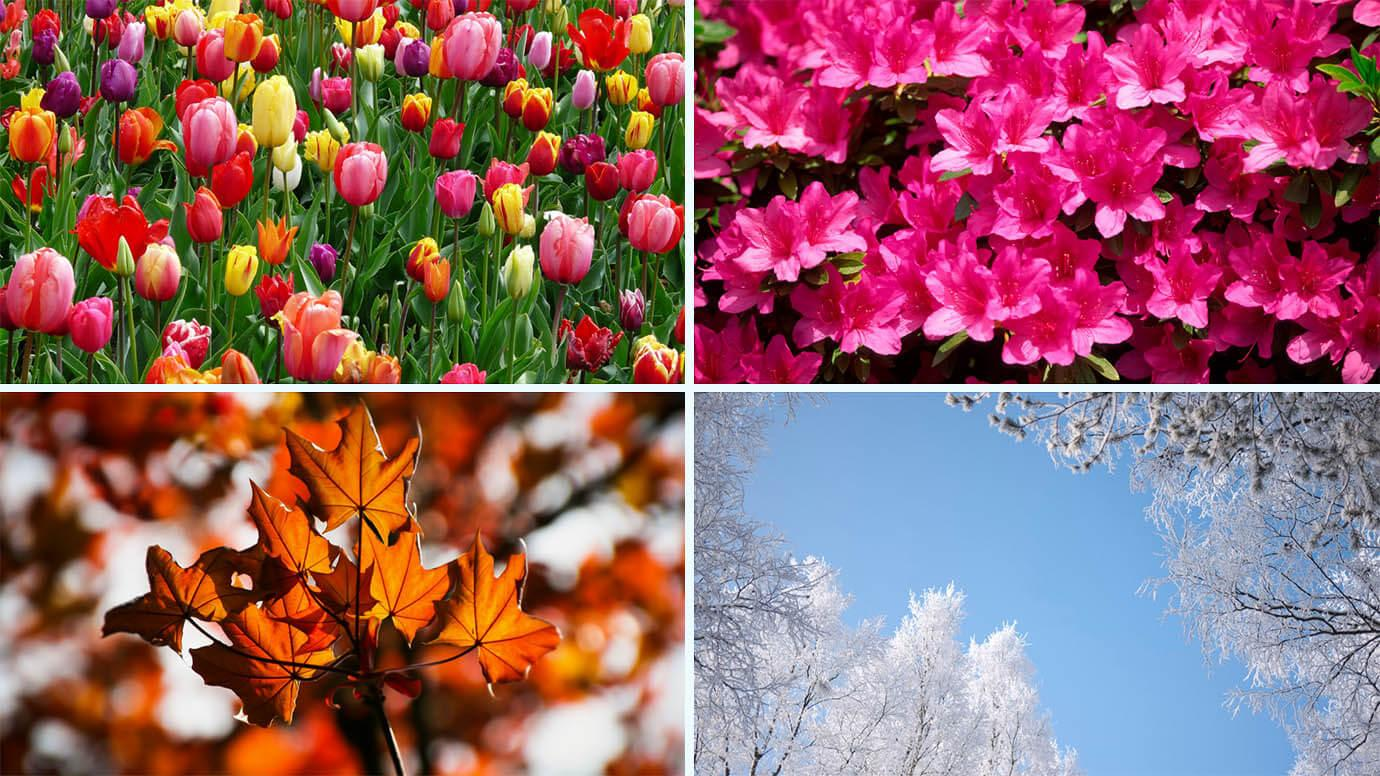 Scenes depicting flowers and leaves in all four seasons
