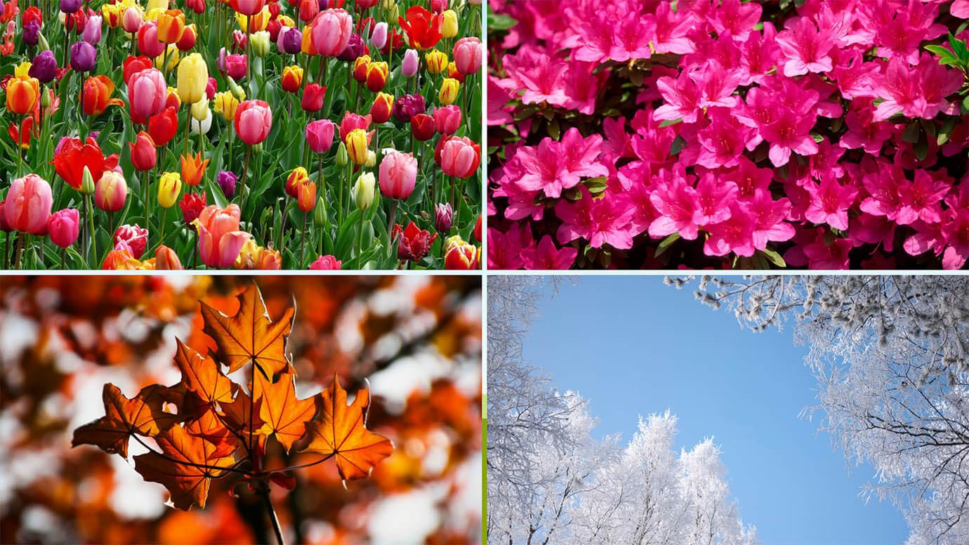 Four scenes showing leaves in each of the seasons