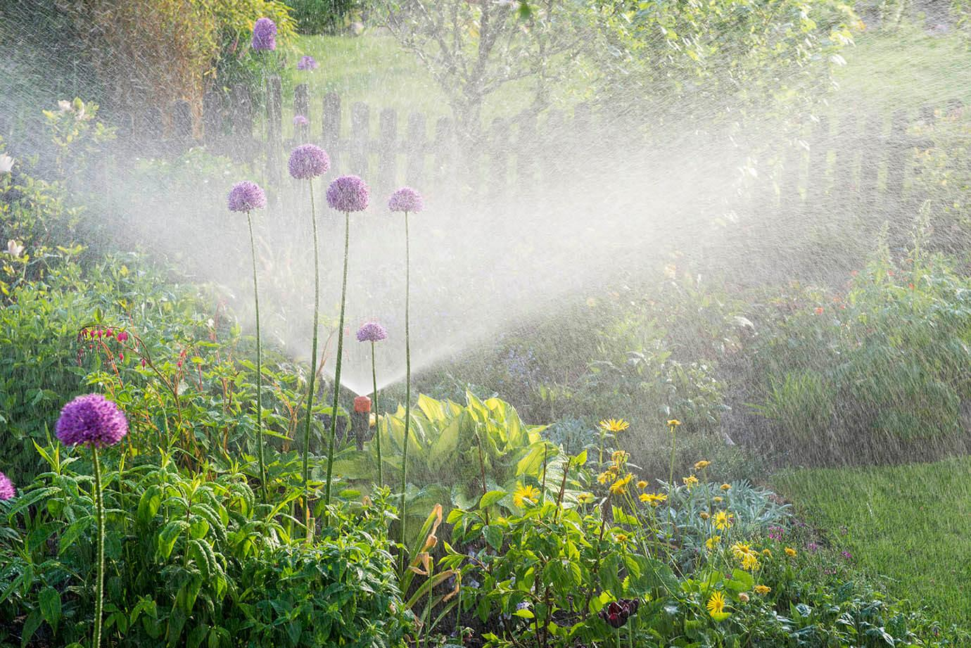 A garden being watered by a sprinkler