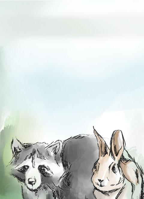 illustrated raccoon and rabbit