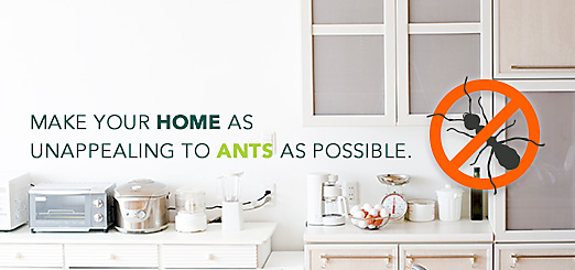 Ant Killer: How to Get Rid of Ants