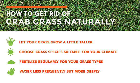 How to get rid of crabgrass naturally
