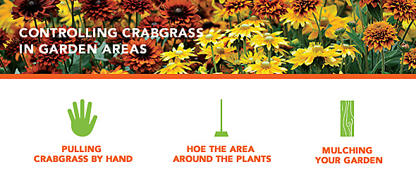 How to control crabgrass in garden