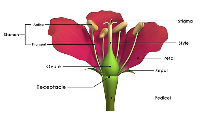 5 Plant Parts You Need To Know