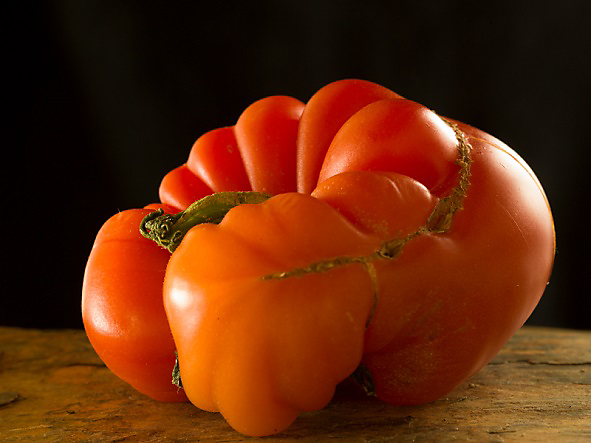 catfacing tomato