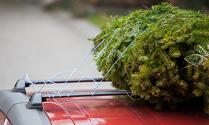 How to Tie Christmas Tree to Car